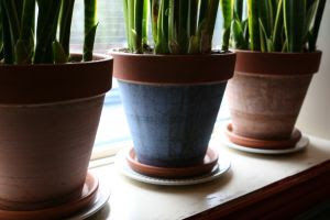766372_potted_plants