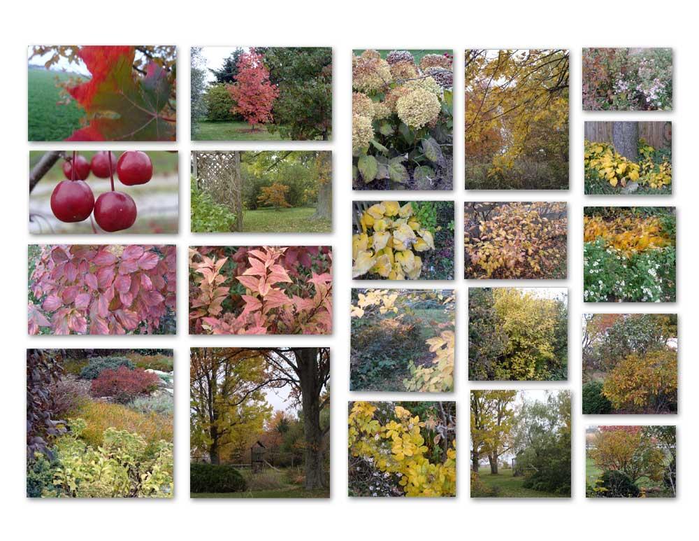 My Autumn #2