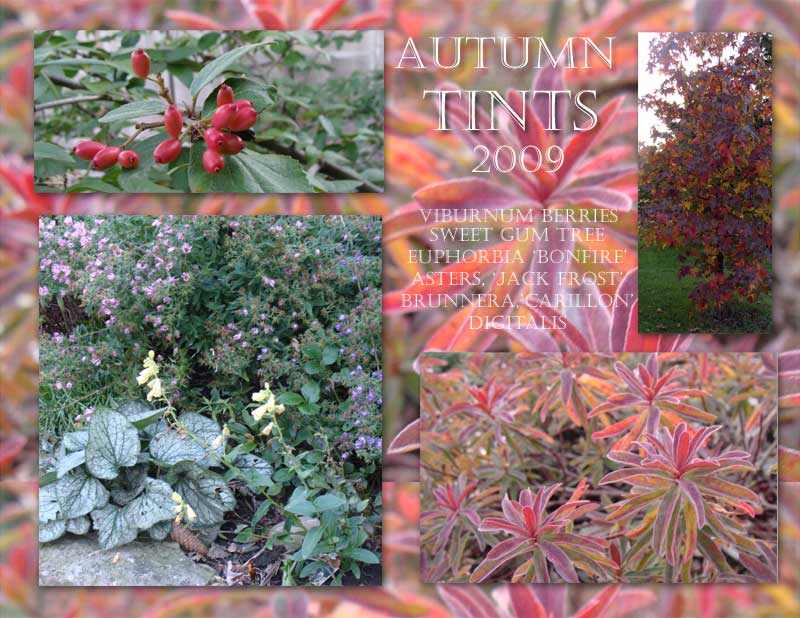 autumn foliage colors in the garden