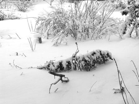 …And Still It Snows