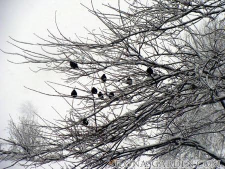 winter comes