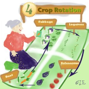 Crop rotation illustration