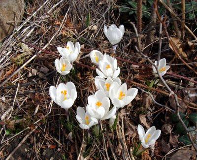 Spring's Watershed