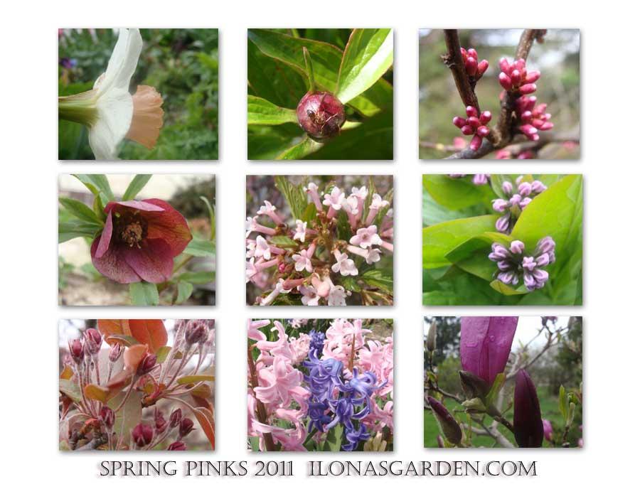 Spring Pinks 2011