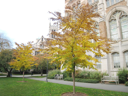 2012 Urban Tree of the Year