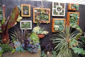 Succulent pictures