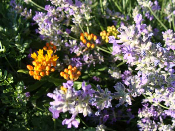 The Garden Blooms, With Flowers and Ticks