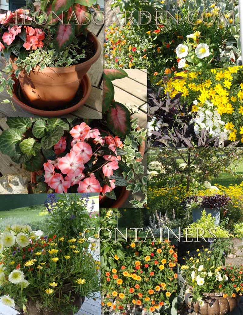 summer flower containers