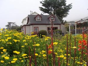 California coastal garden