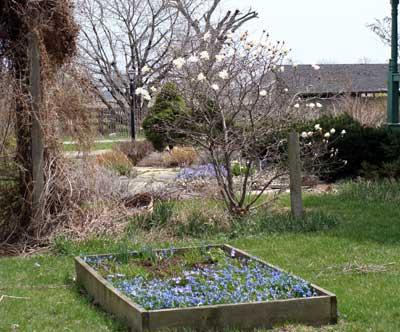 Garden Update April 2010