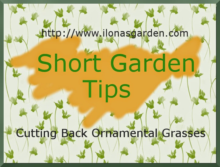 Posted, A Short Garden Tip Video