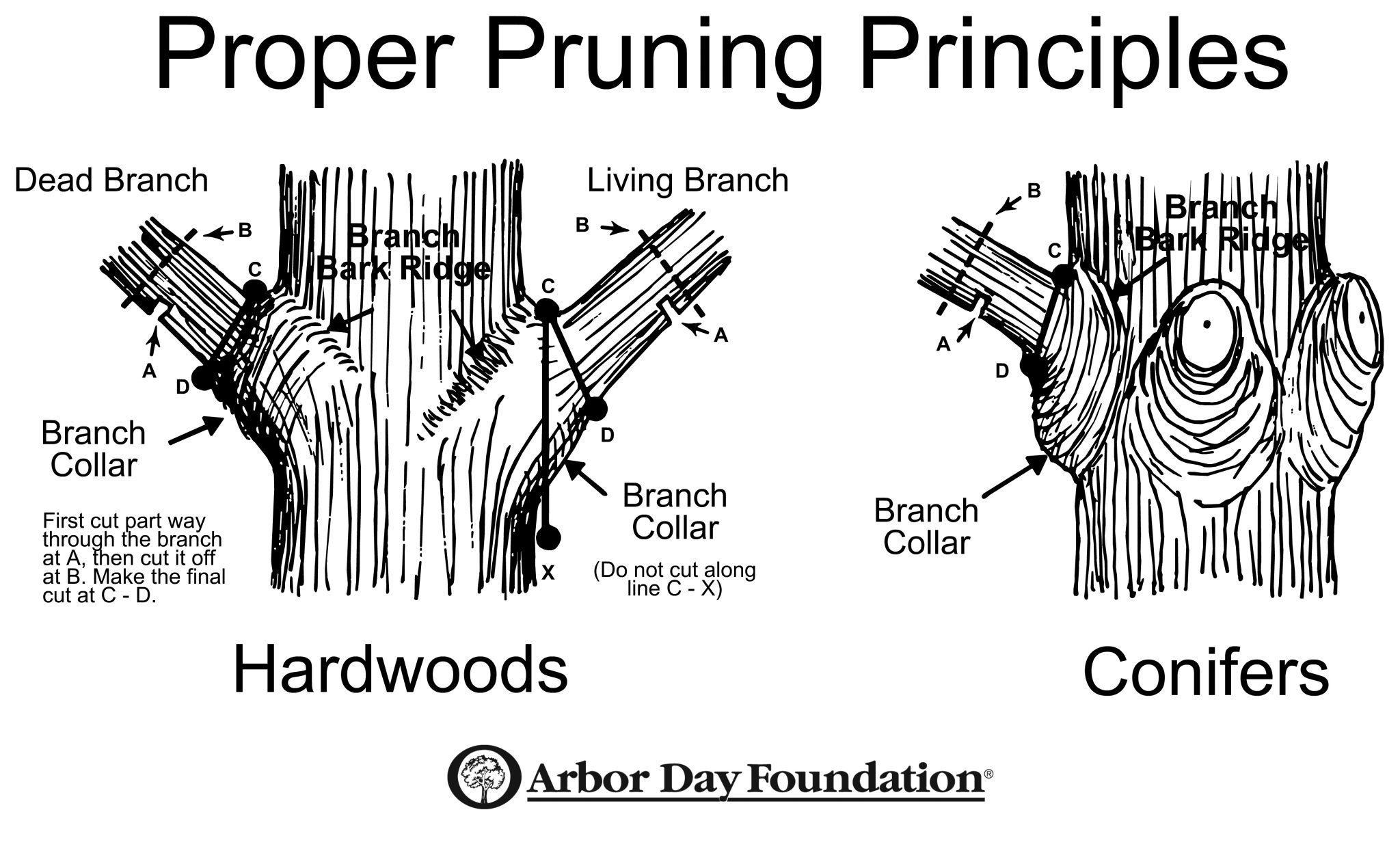 Late Winter Is Time To Prune
