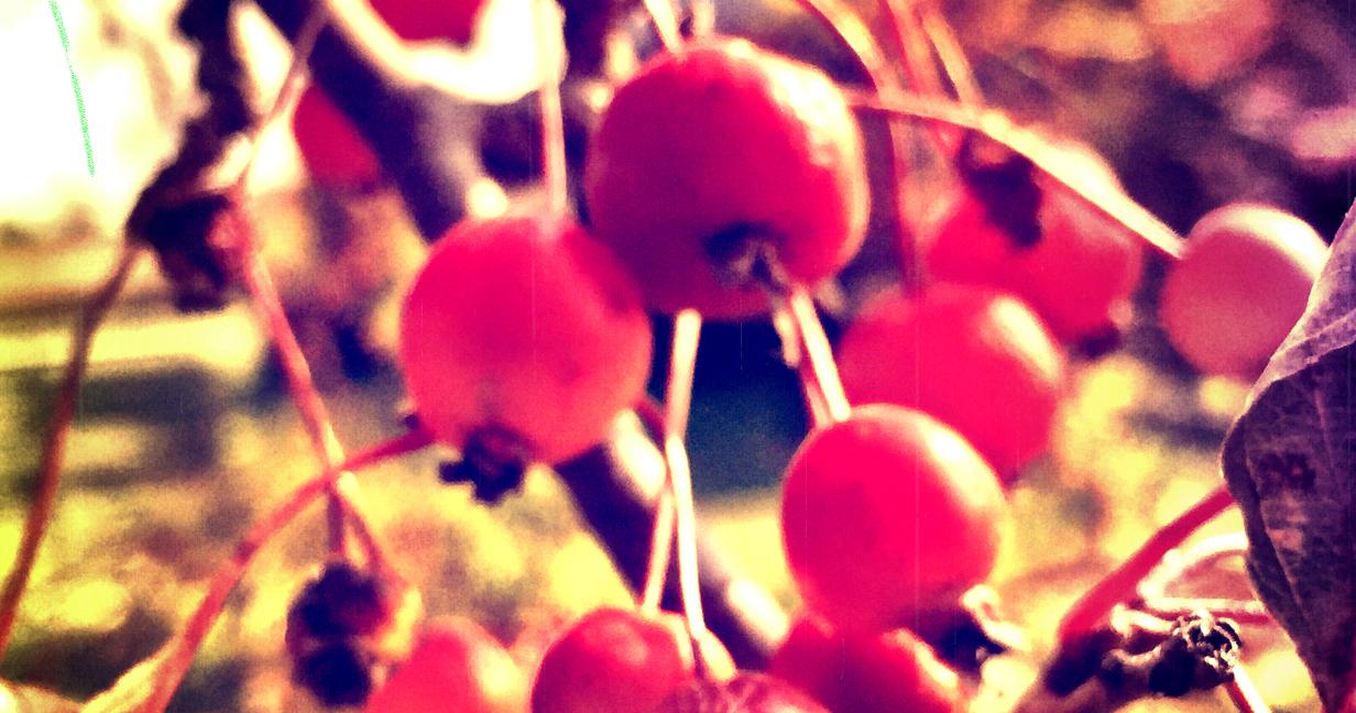 Autumnal Sweetness