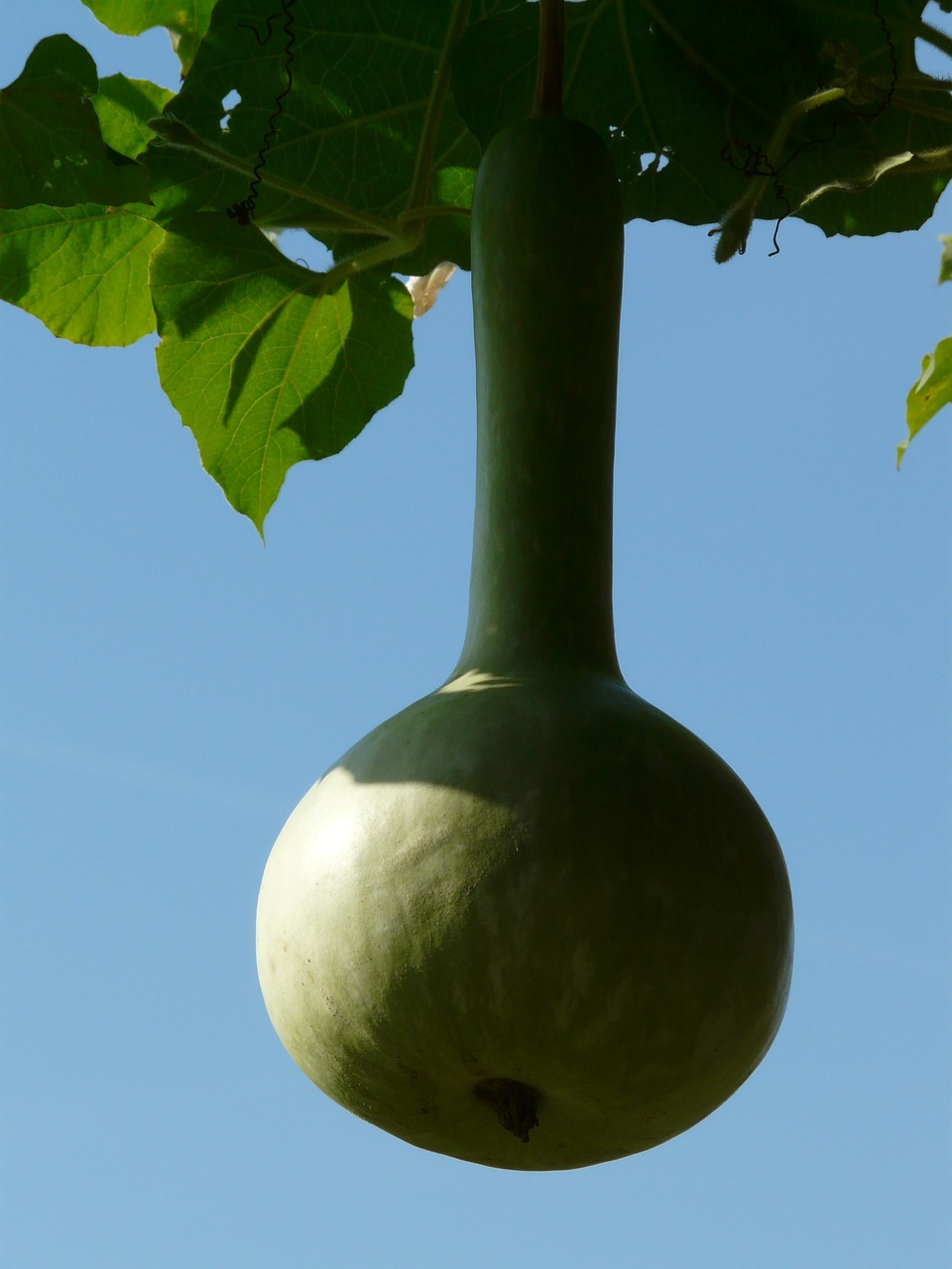 Out Of Your Gourd Gardening