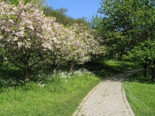 A Crabapple Walk along a drive.