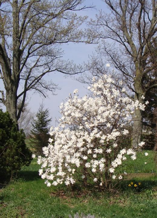 Ornamental Garden Trees For A Small Yard Home Garden