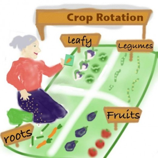the rotation of crops