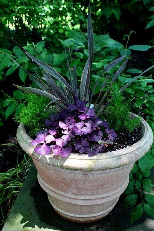 Well Planted Garden Container