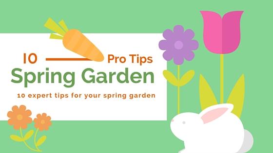 spring garden tips top ten