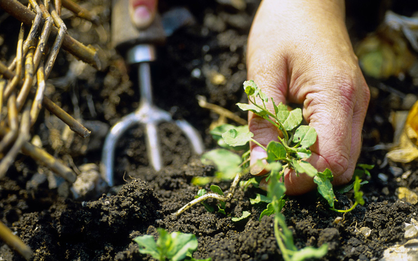 weed you garden beds