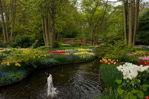 Dutch Bulbs Brighten Landscape