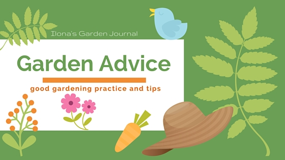 Do You Think Of Your Garden Journal As A Tool?