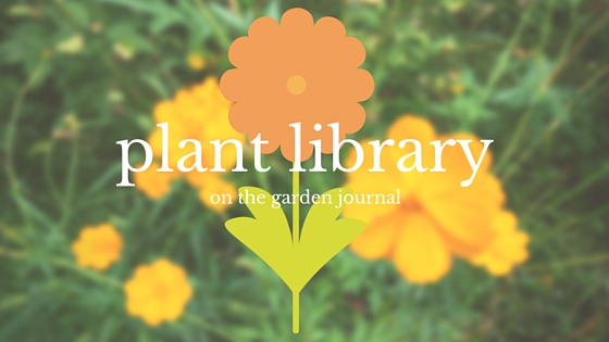 Plant Library On The Journal