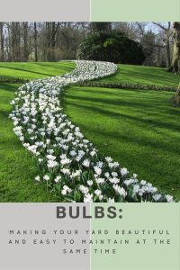 Easy Bulbs