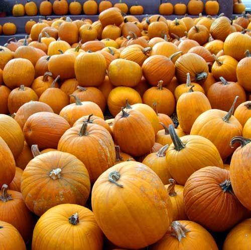 Lots of Orange Pumpkins